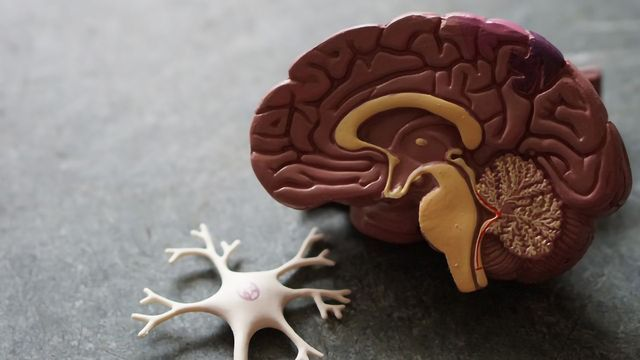 Cholinesterase Inhibitors Associated With Slower Cognitive Decline in Alzheimer's