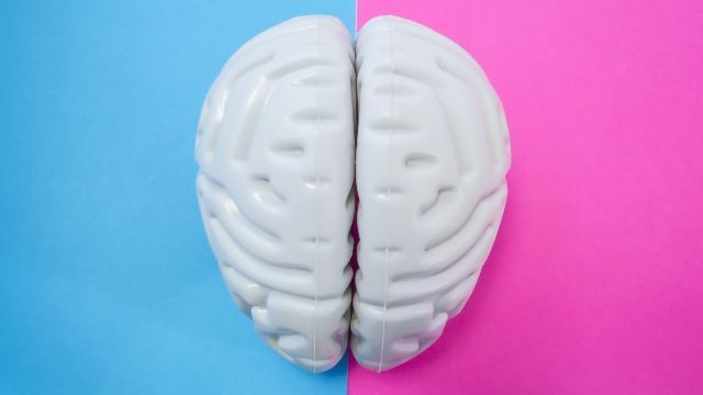 Hardly Any Differences Found Between the Brains of Men and Women
