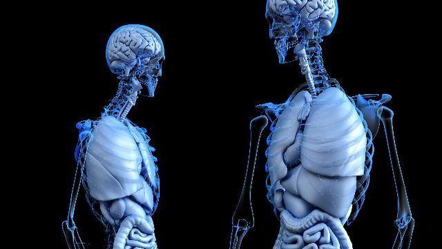 New Method Developed To Enrich Skeletal Stem Cells