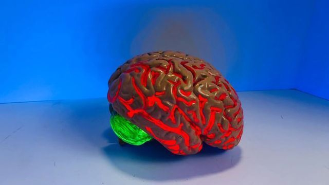 Brain Activity Changes During the First Few Months of Learning a New Language