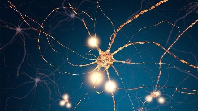 Brain Cells Decide on Their Own When to Release Pleasure Hormone