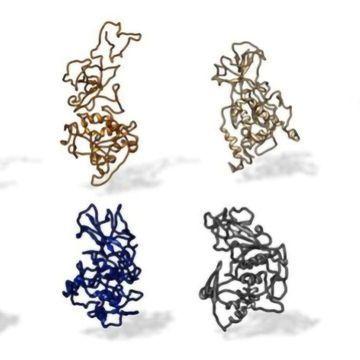 保守抗体结合位点,识别在Covid-19变体上