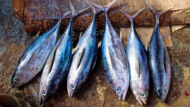 Understanding Tuna's Carbon Footprint