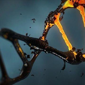损伤感应蛋白质识别DNA断裂