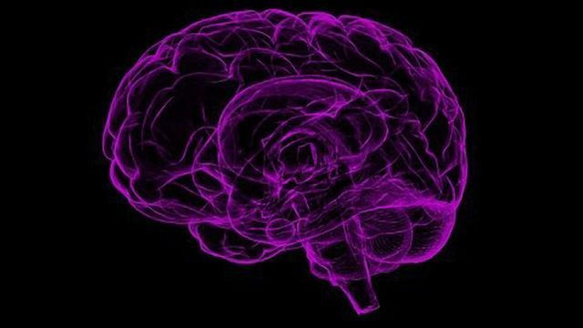 The Secrets of the Brain's Hunger Switch