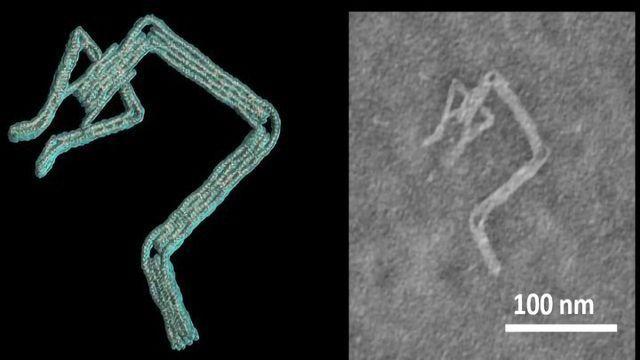 """计算机软件可以在几分钟内设计出DNA""""机器人"""""""