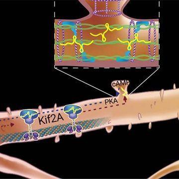 非编码RNA在制造记忆时意外的旅程