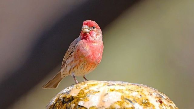 Finches Locked in a Deadly Arms Race