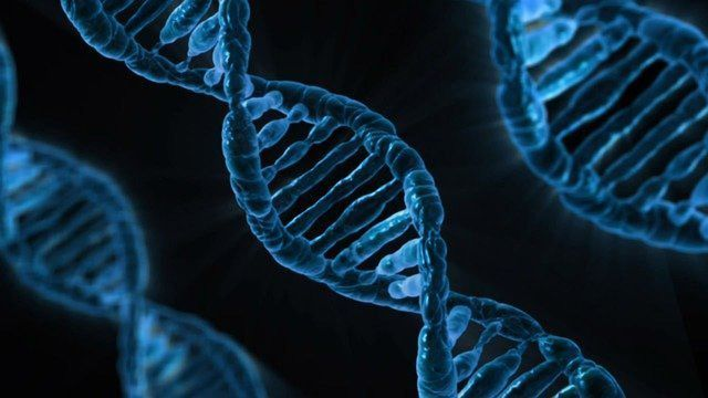 Genetic Differences Between Modern and Archaic Humans