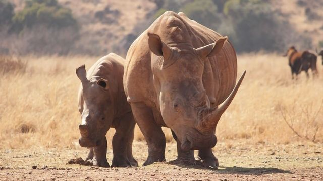 Study Evaluates Genetic Health of the Sumatran Rhinoceros