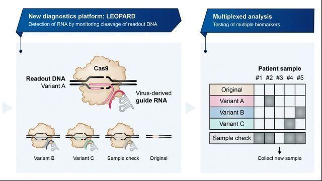 基于CRISPR的诊断可以检测多种与疾病相关的生物标志物