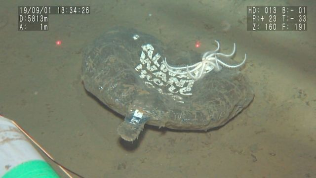 Single-Use Plastics Found at the Deepest Points of the Ocean