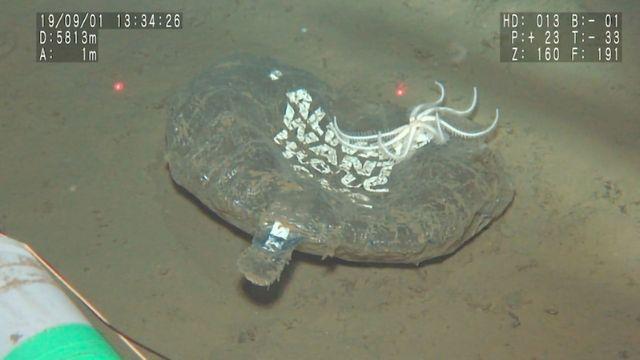 在海洋最深点发现的单用塑料
