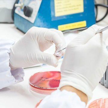 Researchers Take a Step Towards Salmonella Vaccine Development