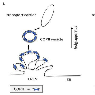 Protein Transport Does Not Work As We Once Thought