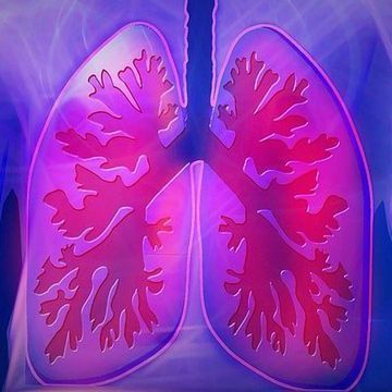 New Mechanism of Lung Tissue Regeneration Revealed