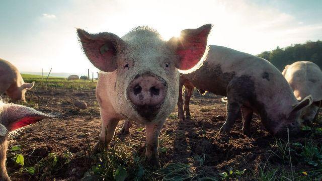 研究人员发现证据表明哺乳动物可以使用他们的肠子呼吸