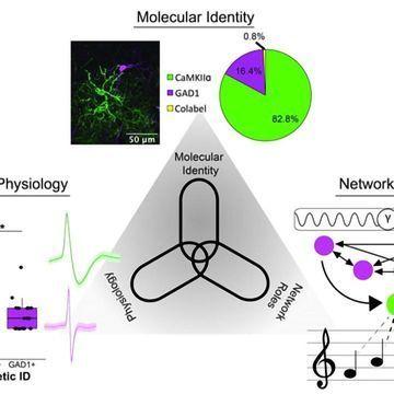 Songbird Forebrain Circuits Mirror Those Seen in Mammals