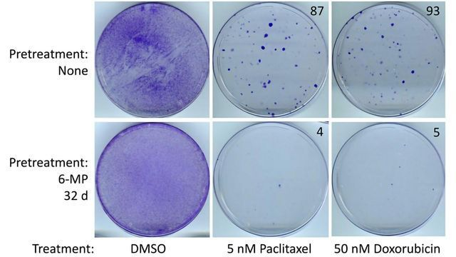 Anti-Inflammatory Drug Inhibits Resistant Triple-Negative Breast Cancer Cells