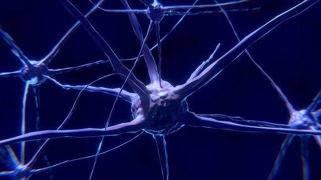 研究小组探索大脑神经细胞中淀粉样蛋白的形成