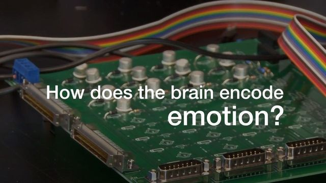 How Does the Brain Regulate Emotion?