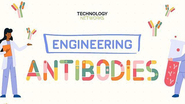 Engineering Antibodies