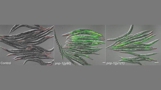 光线揭示了有机体感染如何感染的复杂动态