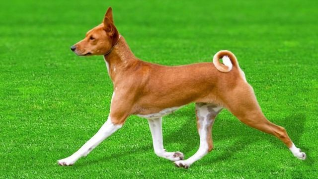 Ancient Dog DNA Provides Clues About Canine Evolution