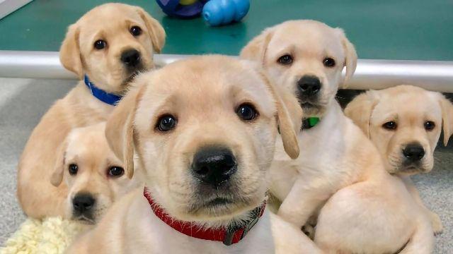 小狗与人类社交的能力是一个遗传性的特质