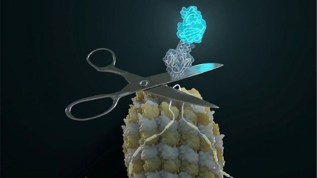 Protein Isoform Expression Can Now Be Followed in Live Cells