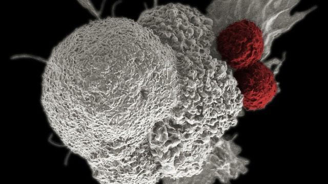 Measuring Real-Time Cell Therapy Potency With Bioelectronic Assays