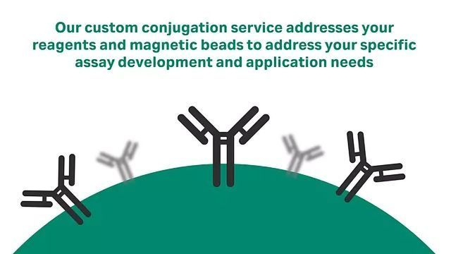 Reagent and Magnetic Bead Conjugation Services
