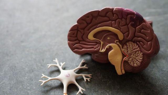 "Brain ""Roadmaps"" Reveal Areas Vulnerable to Alzheimer's Disease"