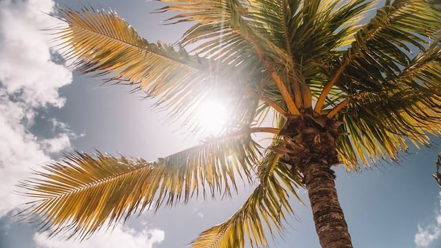 Vitamin D Deficiency Increases Addiction to Sunseeking... and Opioids