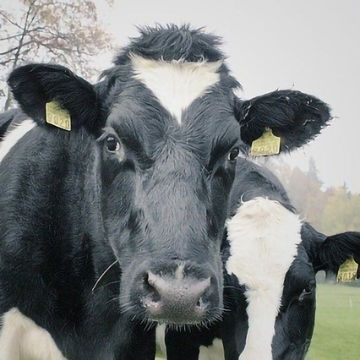 Modified Milk Testing Could Aid Dairy Sustainability