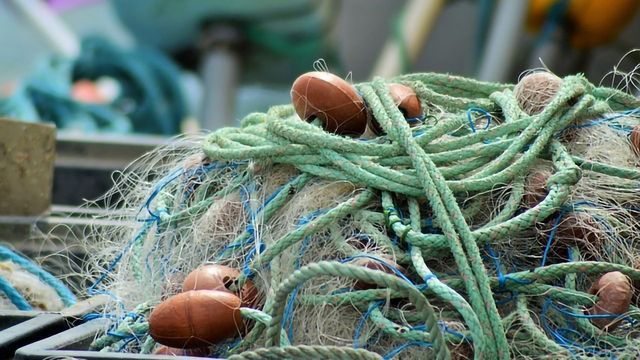 Is the Answer to Overfishing… Algae?