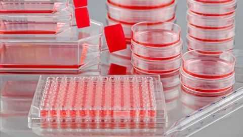 The Shift to Digitization in Cell Culture Monitoring