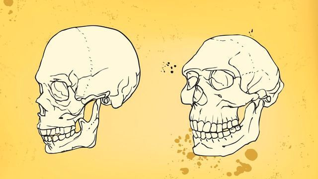 What Have We Learned From the Neanderthals Lately?