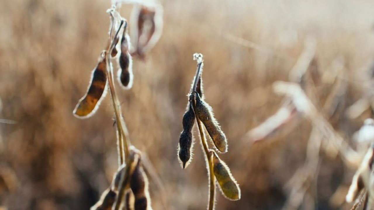 Negative Impact of Climate Change on Plant Roots