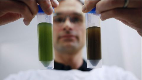 Speaking Algae: Tapping the Ancient Power of Microalgae Using Synthetic Biology