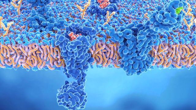 Exploring the Roles of β-Arrestins and Their Therapeutic Potential in GPCR Signaling