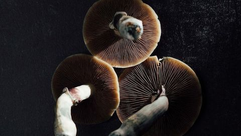 Origin Therapeutics Launches To Fund Emerging Psychedelics Companies
