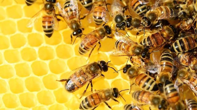 Neonicotinoids: Nerve Agents in Our Food Chain