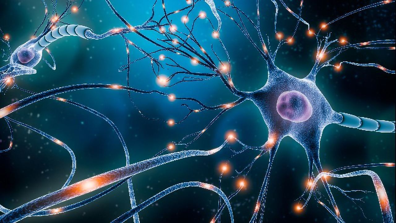 Touch-Sensitive Neurons Are Less Picky Than Expected