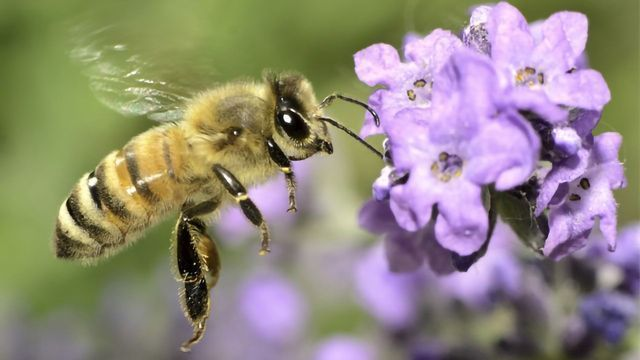 Sustainability Grant Awarded to Honey Bee Research