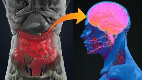 Gut Feeling: How the Gut–Brain Axis Affects Our Mood