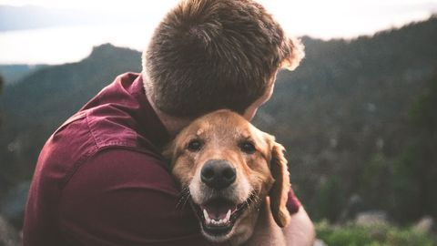 Pet Dogs Can Predict Their Owner's Epileptic Seizures