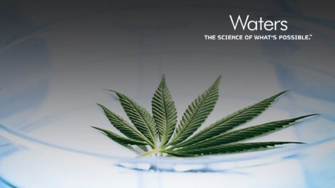 Essential Analytical Tools for a Premium Cannabis Extraction Facility