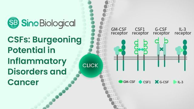 CSFs: Burgeoning Potential in Inflammatory Disorders and Cancer
