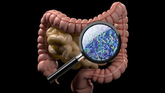 Common medications accumulate in gut bacteria, which may